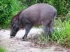Khai thác động vật rừng thông thường phải được chủ rừng đồng ý