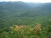 Hiện trạng rừng và đất lâm nghiệp trong lâm phần VQG Bù Gia Mập tính đến ngày 30/6/2020